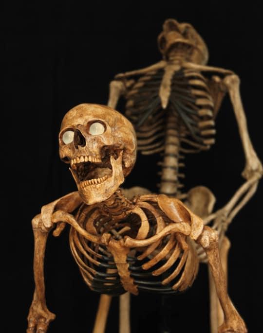 два скелета Алиев и Пашинян